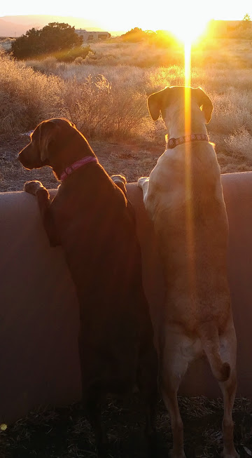 gabb and toots sunset